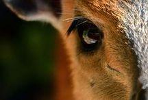 eläimiä - animals
