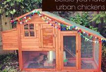 chicken house / by Jaklin Varda