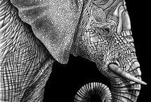 Elephants / Beautiful pictures of the intelligent and majestic elephant.