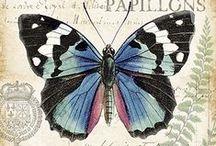 perhosia - butterflies