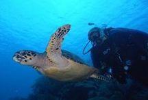 Belize / Belize Aggressor III & Sun Dancer