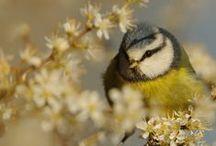 Birds - ptaki