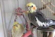 My birds<3 / ...