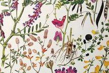Biodiversity / Antiquarian Literature of biodiversity (Natural history and botanical)