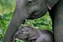 Animal Love / Photos of cute animals