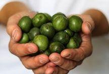 NERGI - Baby-Kiwi -Rezepte / Nergi ist eine kleine Beerenfrucht, die wie eine Kiwi aussieht. Hier sammel ich Rezepte zu dem kleinen leckeren Dingern