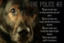 Police K9s / We honor the #workingdog that is the #Police #K9. They are each a #HeroK9. #lawenforcement #thinblueline #police #sheriff #blue