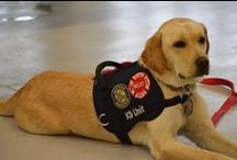 Fire Dogs / We honor the #workingdog that is the #Fire #dog. They are each a #HeroK9. #firefighter #red