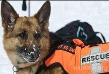 Search & Rescue Dogs / We honor the #workingdog that is the #Search and #Rescue #dog. They are each a #HeroK9. #searchandrescue #orange