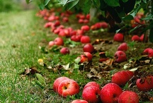 Apple pickins / by Rosalie Tisue