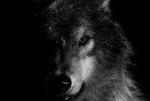 Animals / by Digipixture