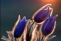 Perennials / Growing perennials / by Redding Garden Club