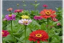 Annuals / by Redding Garden Club