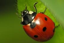 Bugs / by Redding Garden Club