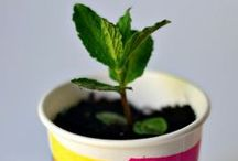 Primary Science | Plants
