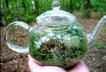 Tiny Gardens/Terrariums / Small gardens, small spaces, terrariums