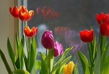 Indoor Gardening / Gardening indoors - indoor plants / by Redding Garden Club