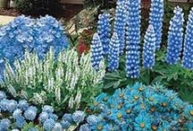 Color Combinations / Garden color combinations / by Redding Garden Club