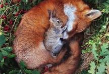 Cute Animals Galore!