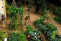 Makkelijker tuinieren / Tips voor moestuin en tuinieren