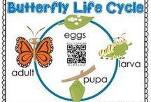 Primary Science | Butterflies