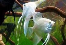 Aquarium അക്വേറിയം