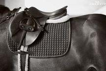 Horse tack / Awesome horse tack