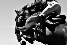 Show Jumping / Horse Photography