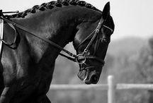 Dressage / Horse Dressage