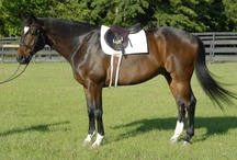 Saddle Pads / Fenwick's therapeutic Bamboo saddle pads are moisture wicking, anti-bacterial and machine wash & dry.  A drier back is a healthier back!