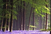The #Forest is my #HappyPlace / Into the woods... Imagery of *real* enchanted forests
