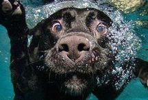 Puppies - Αnimals
