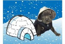 Baby it's cold outside / Pet safety during the winter months