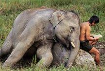 Elephant / BIG but cute!