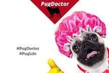 Pug Doctor / This board is dedicated to pinning pug photos. Pug Doctor may have been an April Fools' campaign, but we still love pugs.