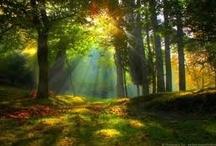 In the dark, dark forest ....