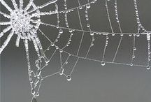 °Spiderwebs / A Spider's web is a magical work of art and Spider silk is the strongest natural substance on Earth! Altough the shape of Spiderweb wonderful,I think Spider is a hideous animal ( Arachnophobia )