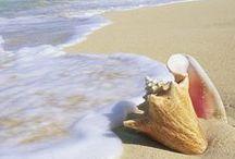 Shell & Starfish