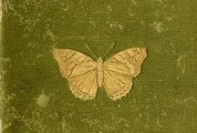 "Butterflies ღ / "" We are all butterflies. Earth is our chrysalis."" ― LeeAnn Taylor"