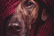 Pictures - Animals