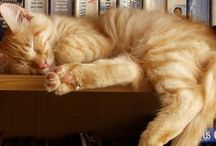 Cats and Books / We love books and we love cats. 'Nuff said.