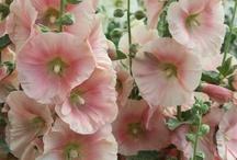 Beautiful Flowers / by Grace Lerant