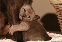"Cute!!!! Say, ""Awww!"" / by Karen Hathaway"