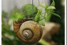"""""""Kertész leszek..."""""""