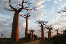 Árbores e bosques / Árbores e bosques do mundo