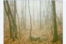 Virginia is for Inspiration / Polaroid photos of Virginia mountain forests