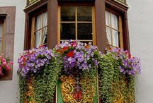 Flower Boxes / by Jill (Hamilton) Van Camp