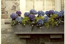 Ideas for Window Boxes
