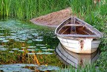 Ponds / Ponds