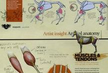 Anatomie (for artists) / collection of anatomy drawings and tutorials